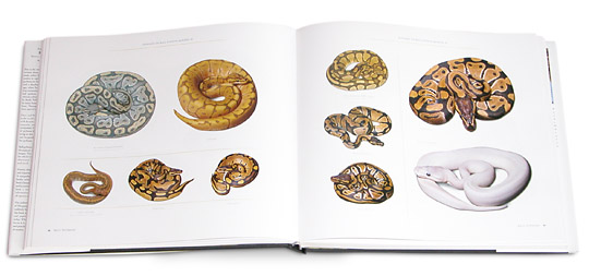 An Alphabet of Ball Python Morphs, A to Z