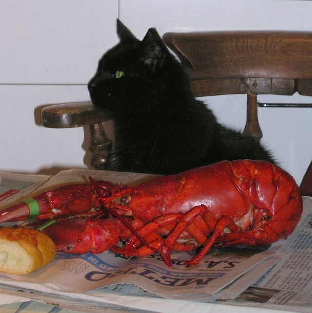 VALENTINES DAY 02/14/11 BOXIE THE CAT AND LOBSTER WISHFUL THINKING!