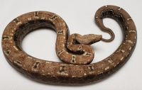 AZTEC IMG T+ BOA CONSTRICTOR